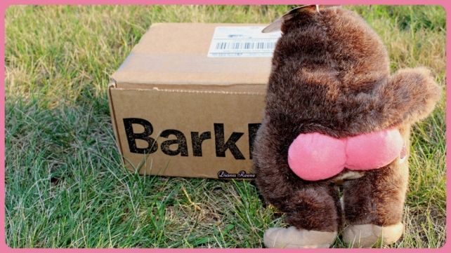 barkbox4