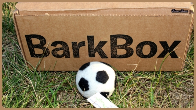 barkbox5