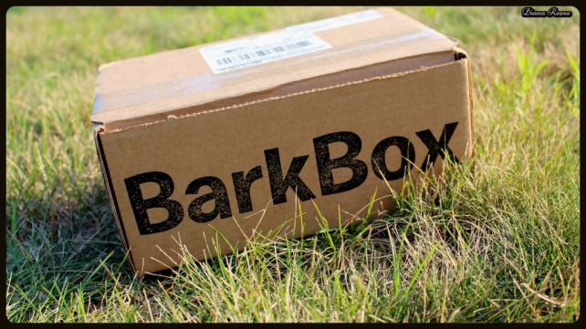 barkbox7